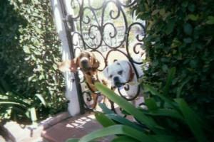 ryan-bradford-dogs-want-to-kill-me